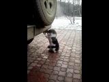 Кот таксикоман!!!